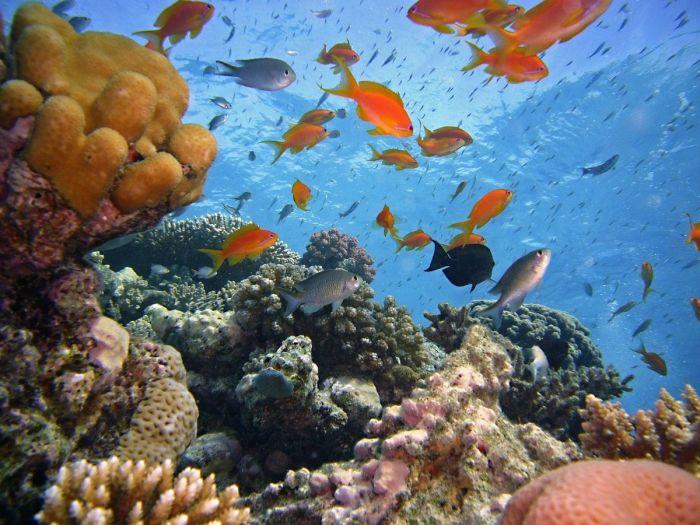 Mergulhar no Mar Vermelho, Egito
