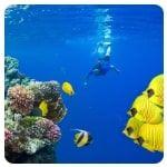 Hurghada - Mergulho