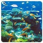 Hurghada - mergulho - Mar Vermelho